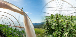 Tres municipios del Cauca viven a oscuras por culpa de la marihuana