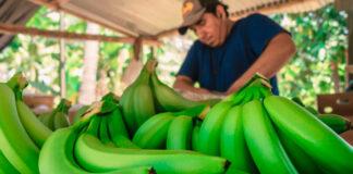 Alerta en La Guajira ante posible presencia de plaga en cultivos