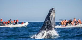 Ver Ballenas en el Pacífico: El plan perfecto para vacaciones