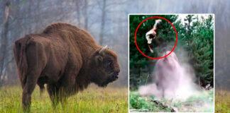 Bisonte ataca a turistas en un parque, milagrosamente la niña se salva