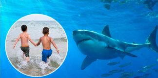 Niños nadaban en la playa a sólo metros de un TIBURÓN BLANCO
