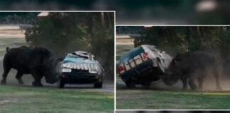 Rinoceronte destrozó un vehículo con un hombre en su interior