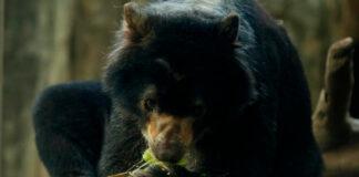 Exigen LIBERAR a 'Chucho' del zoológico de Medellín