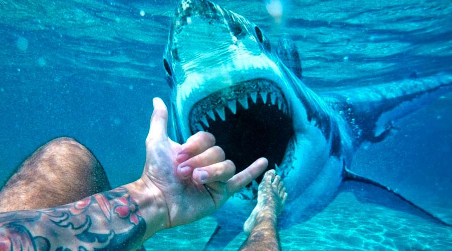Youtuber se vuelve carnada para comprobar si los tiburones puede oler la sangre a kilómetros