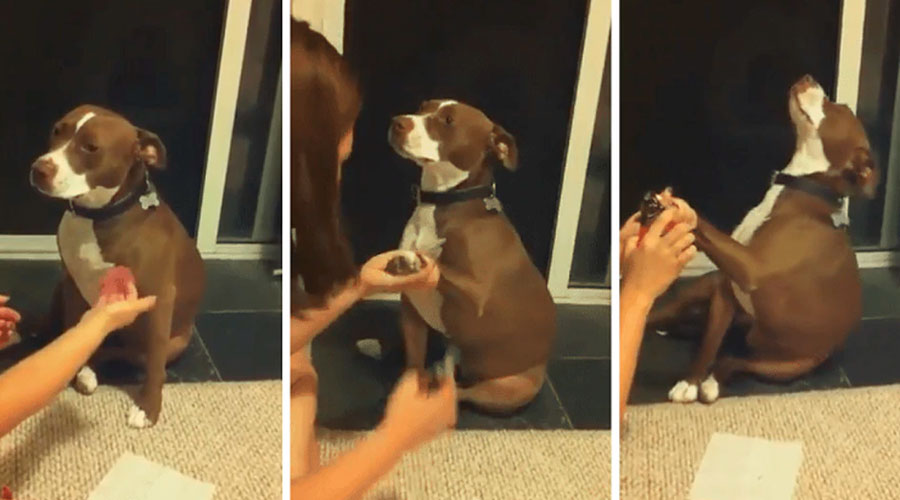 VÍDEO: Perro finge un desmayo para evitar que le corten las uñas