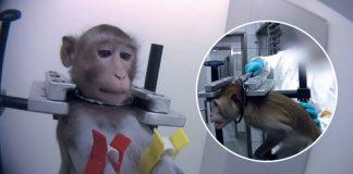 Graban en secreto cruentas torturas de animales en un laboratorio alemán