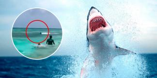 Enorme tiburón muy cerca de bañistas fue captado en playa colombiana