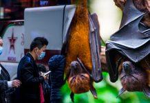 Murciélagos PODRÍAN ser los HUÉSPEDES del CORONAVIRUS de Wuhan