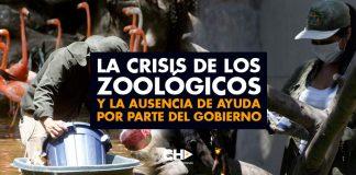 La CRISIS de los ZOOLÓGICOS en Colombia y la ausencia de ayuda por parte del gobierno