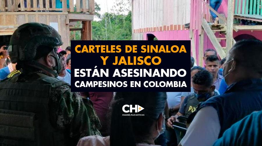 Carteles de SINALOA y JALISCO están asesinando campesinos en Colombia