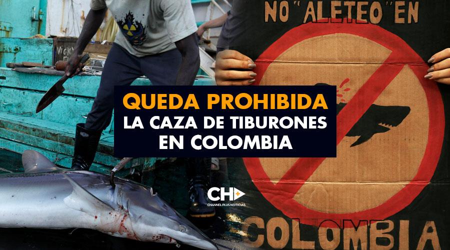 Queda prohibida la caza de TIBURONES en Colombia