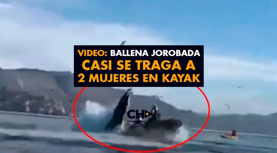 Video: Ballena jorobada casi se traga a 2 mujeres en kayak