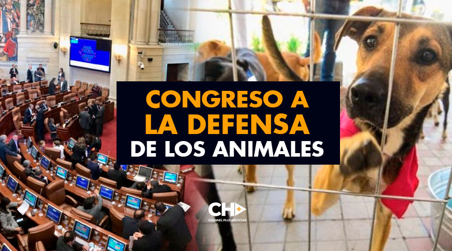 Congreso a la defensa de los animales