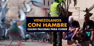 Venezolanos con HAMBRE cazan palomas para comer