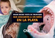 Miami recibe visita de tiburones que atacaron a un niño en la playa