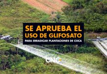Se aprueba el uso de Glifosato para erradicar plantaciones de Coca